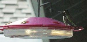 5-hummer-watching